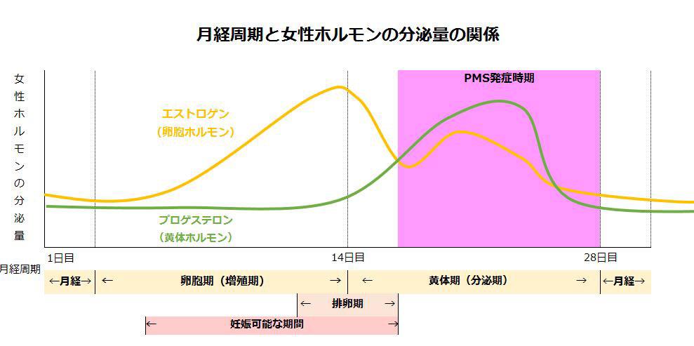 月経周期と女性ホルモンの分泌の関係