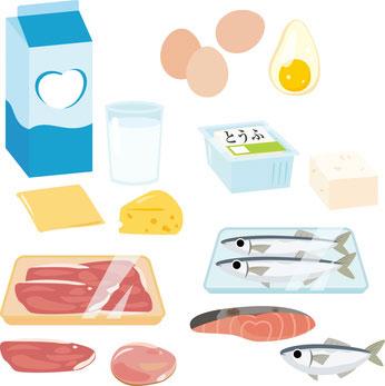 タンパク質 食べ物